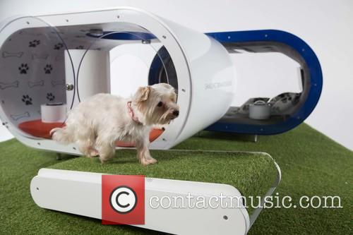 Bark To The Future! Introducing The Samsung Dream...