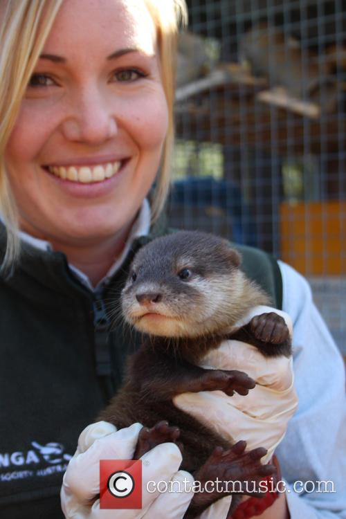 Zoo Welcomes Three Otter and Pups 3