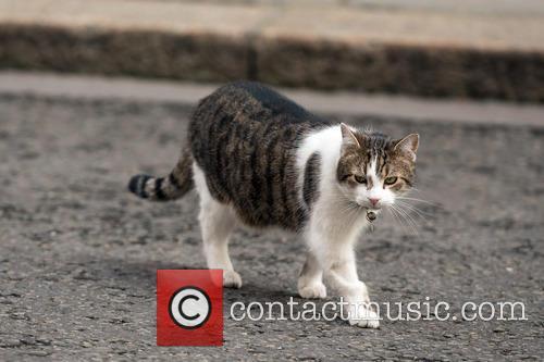 Larry The Cat 5