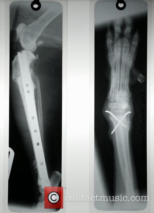 Animal X-ray Lampshades 5