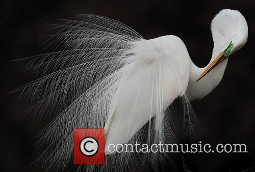 Grand Prize Winner - Great Egret. 6