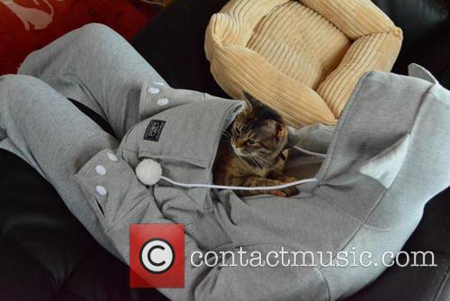 Hoodie, Pocket, Let Your Pet Snuggle and Inside 10