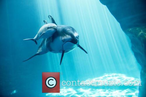 New Male Dolphin Calf 2