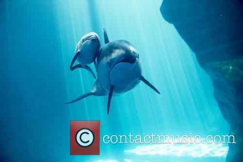 New Male Dolphin Calf 3