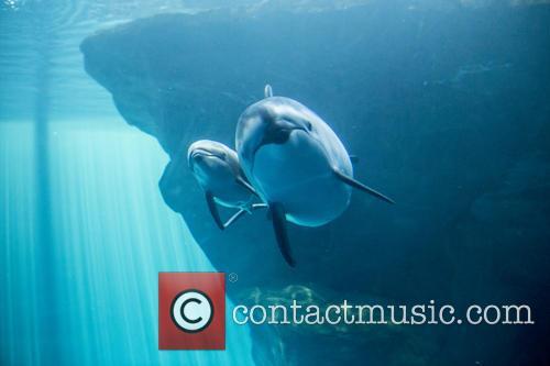 New Male Dolphin Calf 4