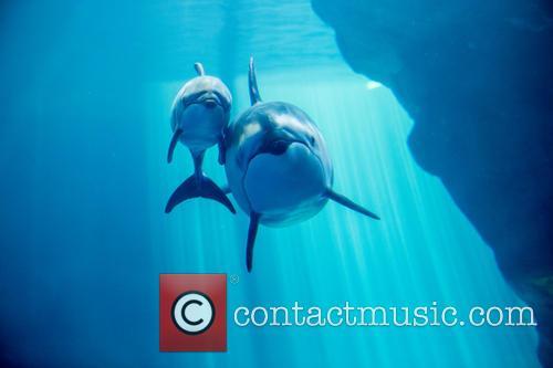 New Male Dolphin Calf 5