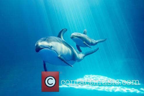 New Male Dolphin Calf 6