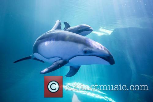 New Male Dolphin Calf 7