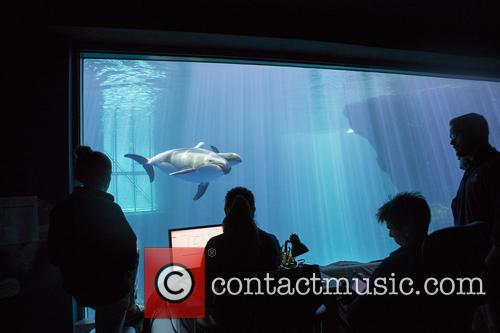 New Male Dolphin Calf 8