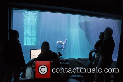 New Male Dolphin Calf 1