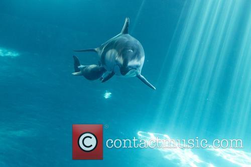 New Male Dolphin Calf 9