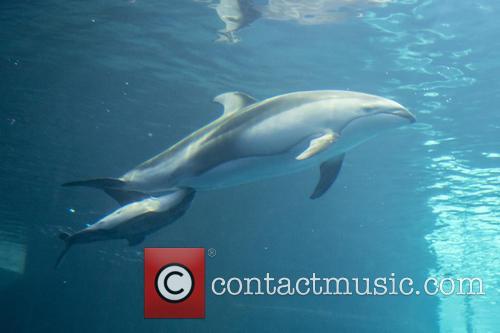 New Male Dolphin Calf 10