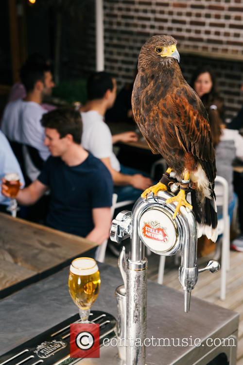 Wimbledon and Rufus The Hawk 2