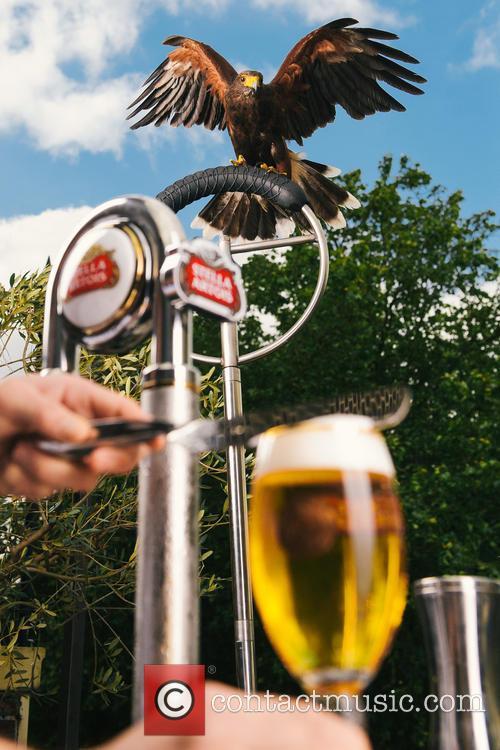 Wimbledon and Rufus The Hawk 3