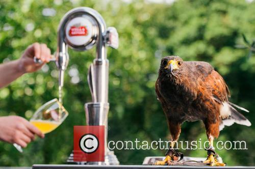Wimbledon and Rufus The Hawk 1