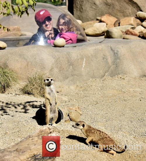 Cincinnati Zoo Visitos Get, Chance To Compare The and Meerkats 1