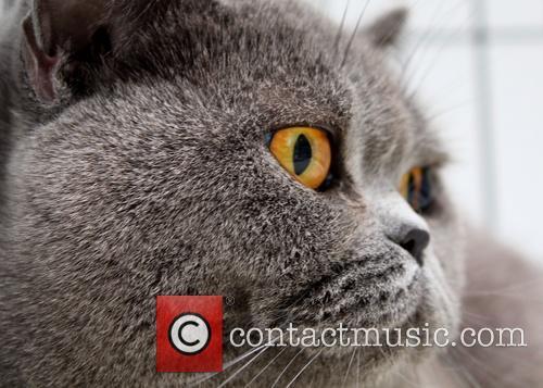 2015 Bulgarian International Cat Exhibition