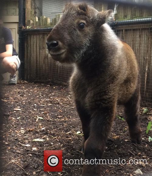 Blakely The Australian Shepherd, Nursery Dog Takes Care, New Baby Takin and Cincinnati Zoo 4