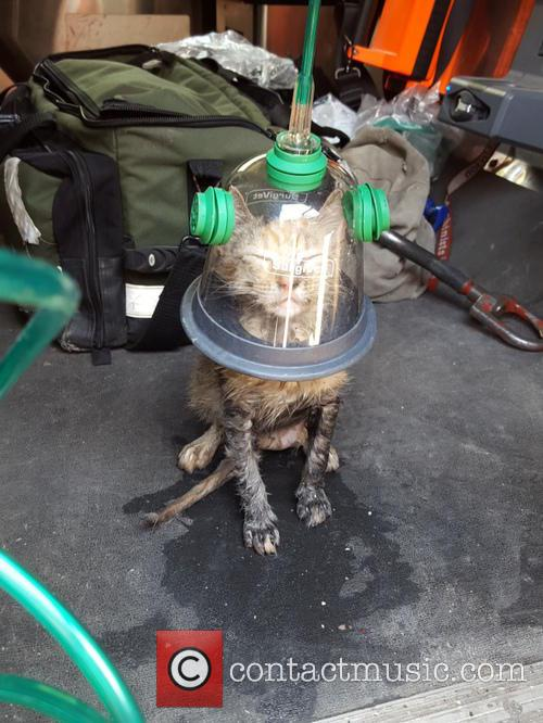 Cat Uses Up One Of It's Nine Lives...