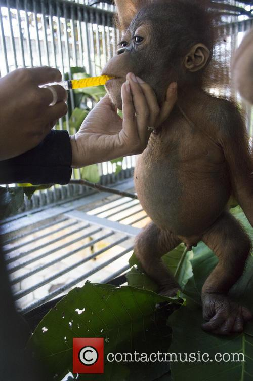 International Animal Rescue Take Over Care of Baby...