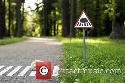 Tiny Road Signs and Little Creatures 6