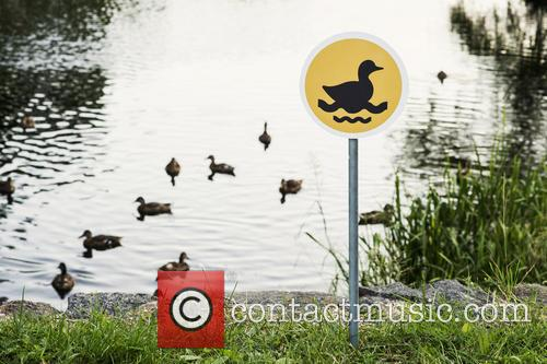 Tiny Road Signs and Little Creatures 7