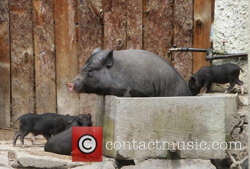 Bulgaria Zoo Hot Weather 1