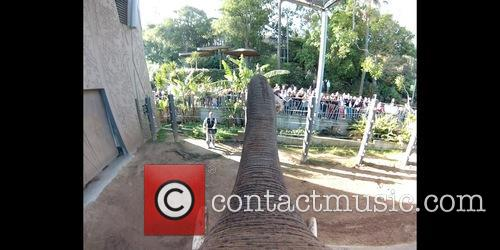 Elephant Gopro Shows Taronga, Animals and Play 4