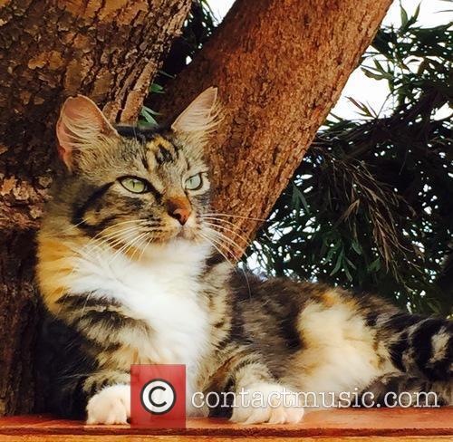 Cat Sanctuary and Hawaiian Island 2