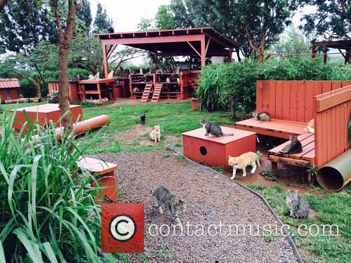 Cat Sanctuary and Hawaiian Island 3