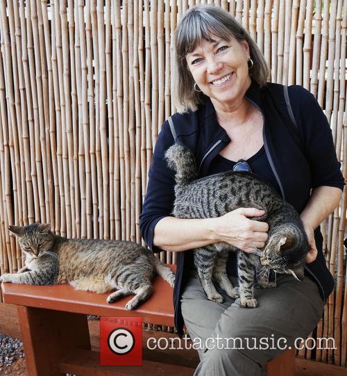 Cat Sanctuary and Hawaiian Island 4