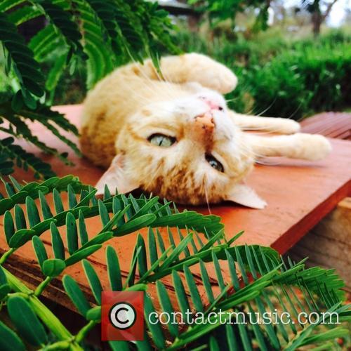 Cat Sanctuary and Hawaiian Island 1