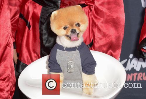 Jiff The Dog 1