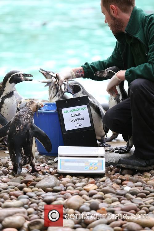 Humboldt Penguins 3