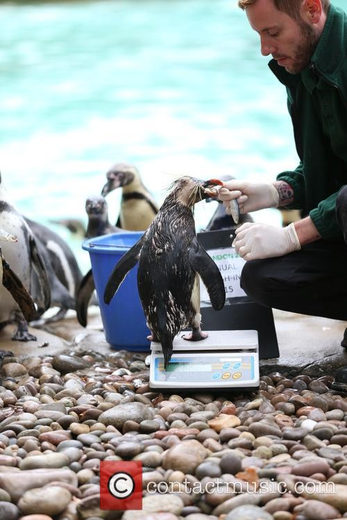 Humboldt Penguins 4