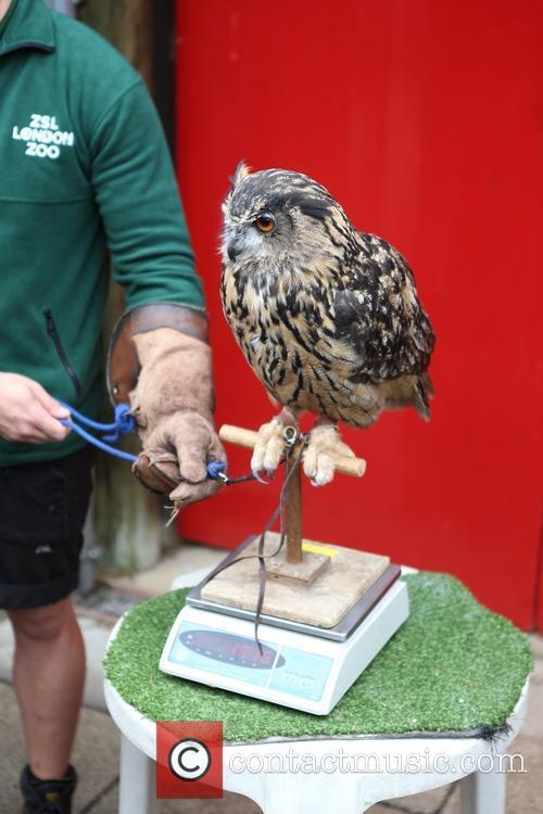 Eagle Owl 4