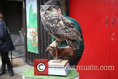 Eagle Owl 6