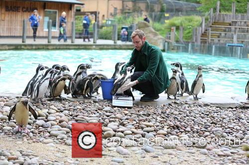 Humboldt Penguins 8
