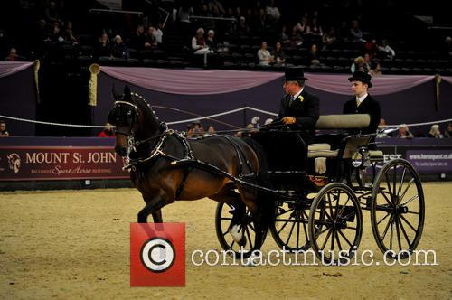 Contestant and Harness Horse & Pony Of The Year 2