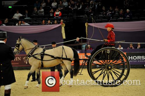 Contestant and Harness Horse & Pony Of The Year 4