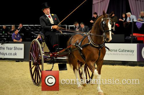 Contestant and Harness Horse & Pony Of The Year 5