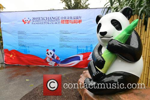 Ming The Giant Panda Statue 5