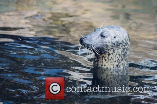 Weymouth Sea Life Adventure Park reunites separated seal...