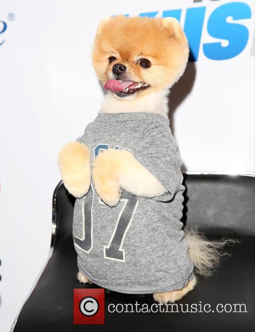 Jiff The Dog 2