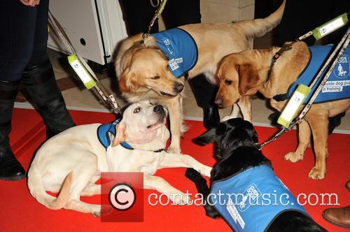Guide Dogs 1
