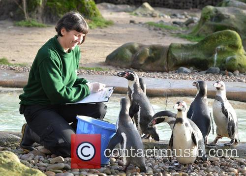 Humboldt Penguins 1