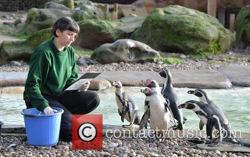 Humboldt Penguins 2