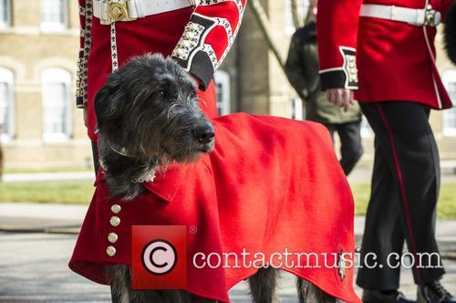 Duke Of Cambridge 1