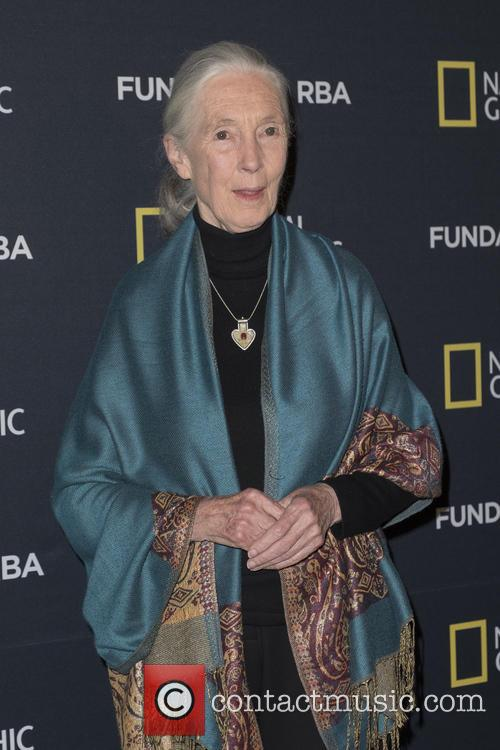Dr. Jane Goodall attends a conference