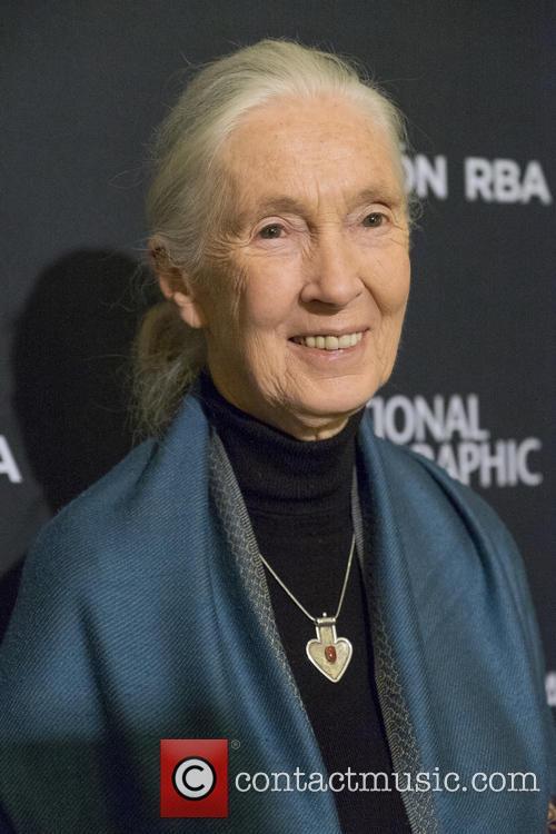 Jane Goodall 3
